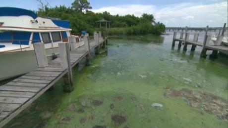 florida foul smelling algae sandoval pkg_00002928