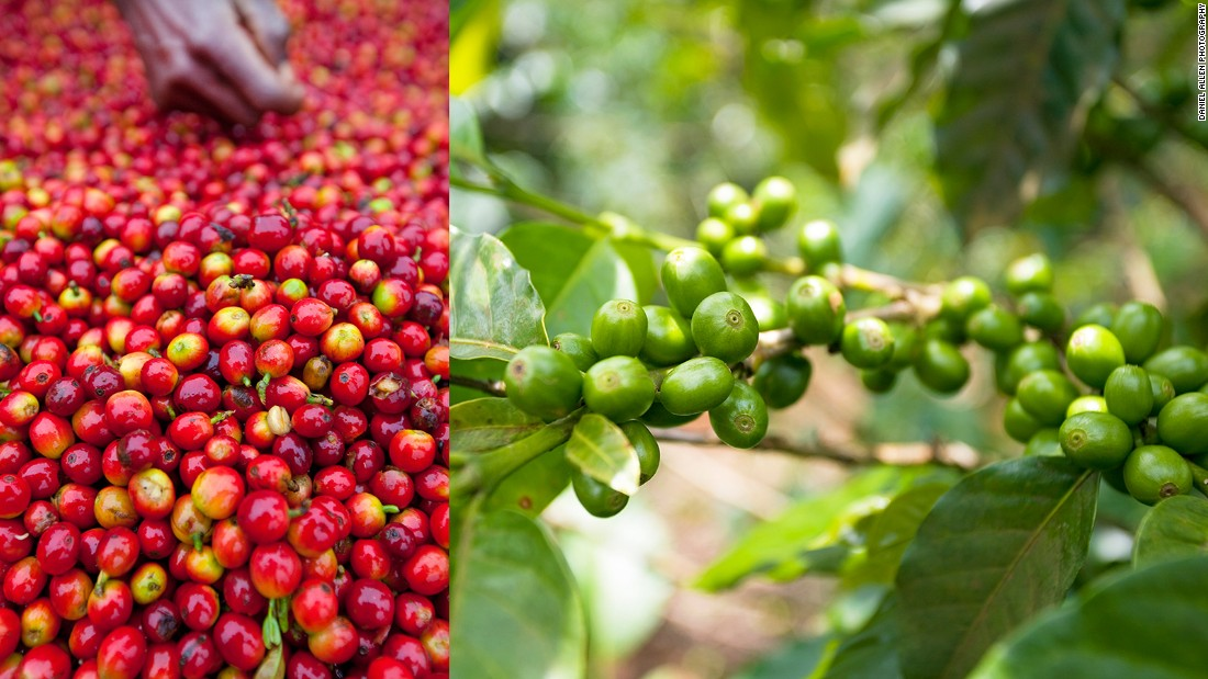 The Bolaven Plateau is the heart of Laos' coffee industry, producing the lion's share of the national crop, most of which is exported. Coffee is one of the country's most important revenue sources. According to the Lao Coffee Association, exports of 30,000 tons generated about $72 million for the country in 2013.