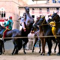 siena horses lined up