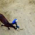 siena horses overhead horse