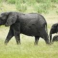 Elephants, Bwabwata