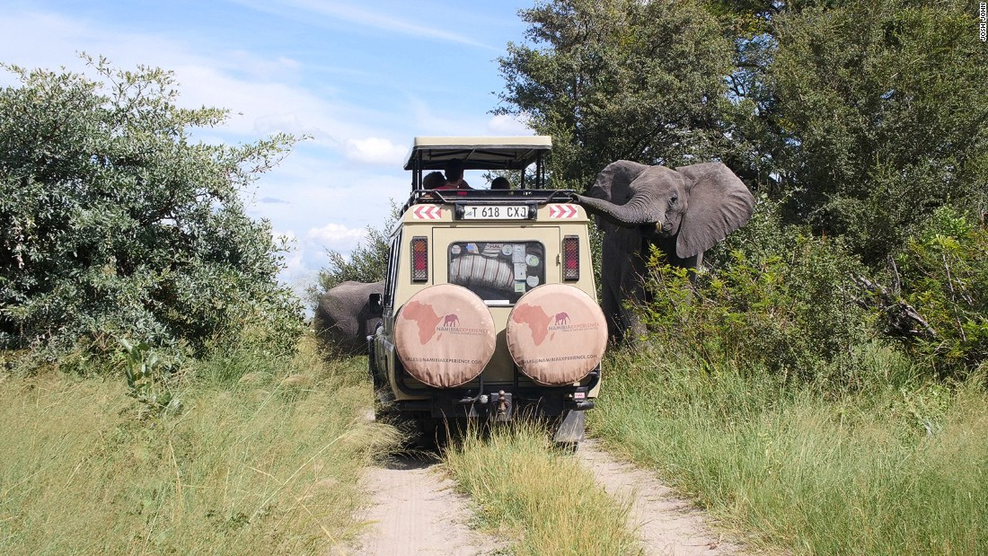Namibia Experience offers excursion tours which allow guests to get up close to African elephants.