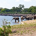23.-Elephant-Herds-at-the-river