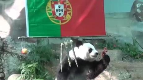 cnnee digital pkg pandas predijeron victoria portugal eurocopa_00002501