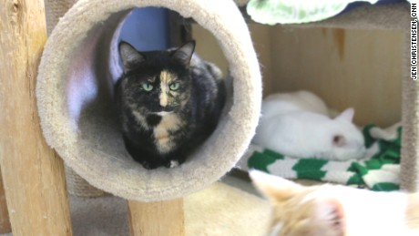 Tree House Humane Society in Chicago was the country's first cageless, no kill shelter
