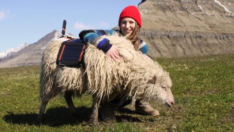 Durita Dahl Andreassen, an employee of Visit Faroe Islands, poses with a sheep strapped with a 360-degree camera.