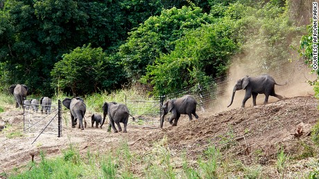 An elephant family is off to explore Nkhotakota