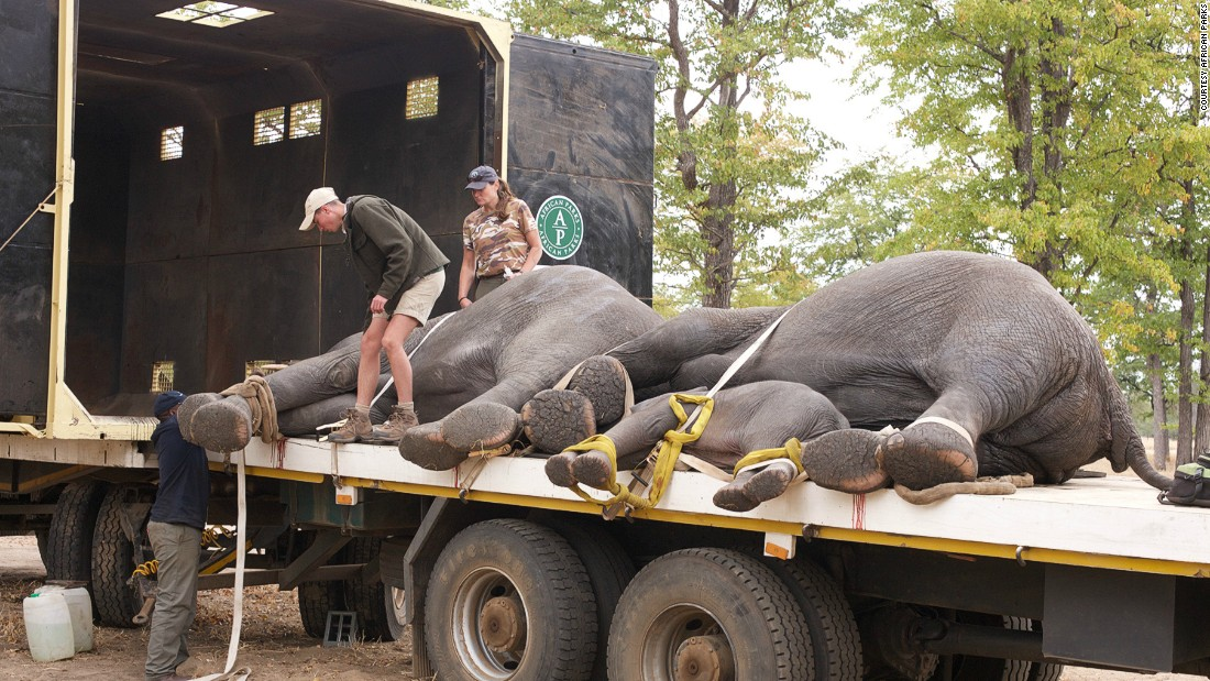 The team take care not to separate baby elephants from their mothers, according to the organization. <em>Photo: Frank Weitzer</em><br />