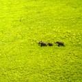 african elephants garamba