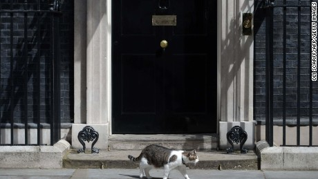 David Cameron: Farewell my feline friend