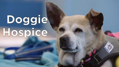 CNN Hero Sherri Franklin: Doggie hospice