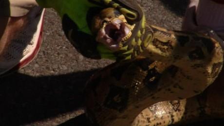 Snake crawls into SUV in Pennsylvania_00012410