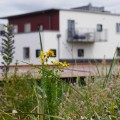 malmo green roof 3