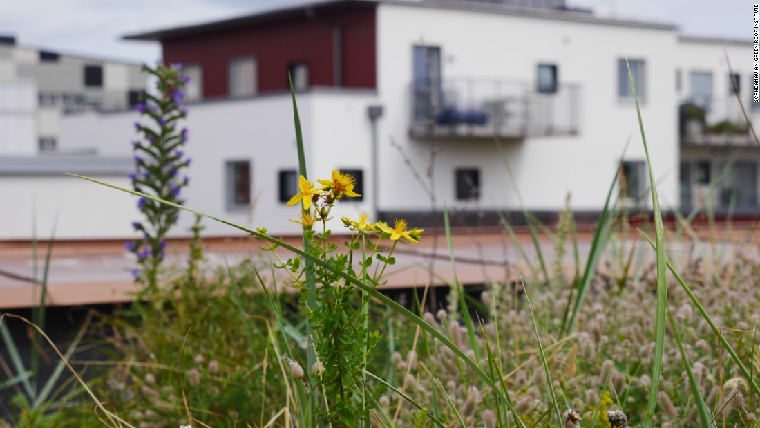 """I think green roofs also bring a great deal of aesthetic value for the people with balconies and windows facing them,"" says Jonatan Malmberg, head of projects and development at the Scandinavian Green Roof Institute."