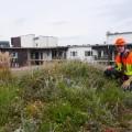 malmo green roof 4