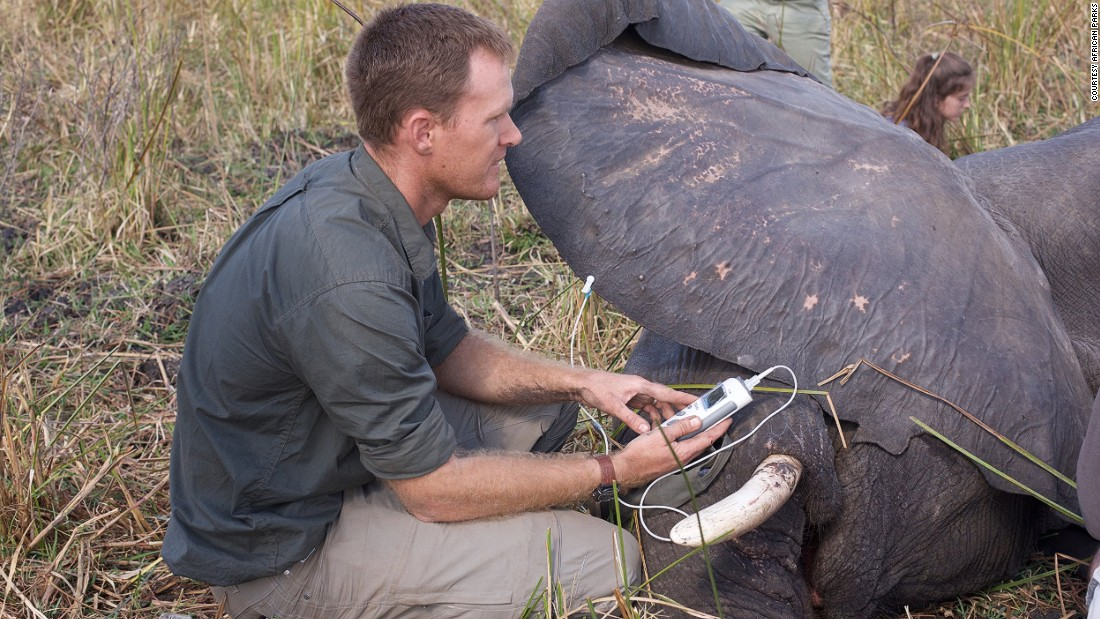 The animals' vital signs are monitored by the team paramedic throughout the move. <em>Photo: Frank Weitzer</em>