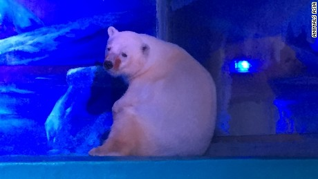 'Tragic' images of aquarium's bear leads to change