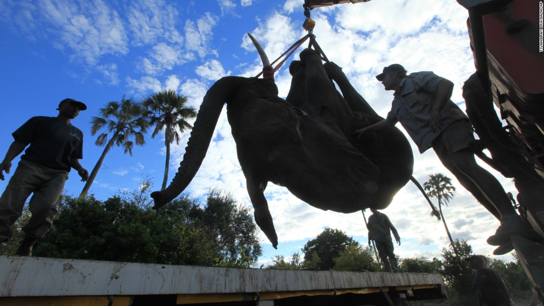 The $1.6 million Malawi conservation project is meant to help restore the threatened African elephant population.