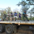 elephant relocation 9