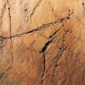 Coa Valley Rock Art c jose Paulo Ruas