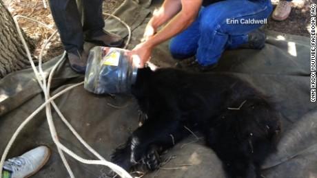 cnnee rec hombre salva a un oso atorado en un balde _00004105