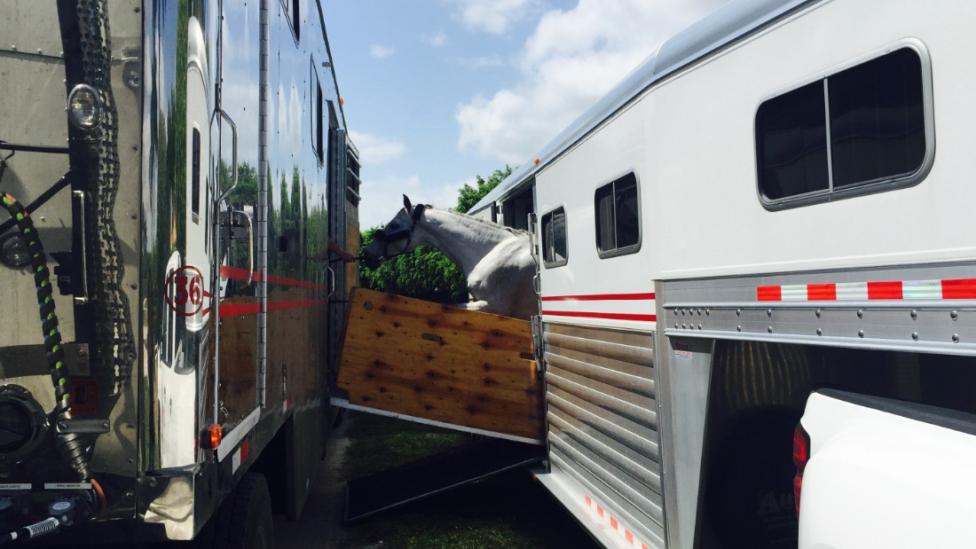 Special horse charter companies provide stall door to stall door service, picking the horse up at its home barn and transporting it in a specially air conditioned vehicle to the airport.
