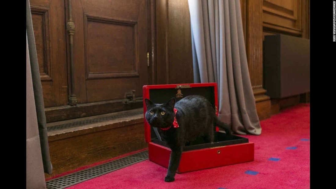 "Gladstone's new job will be ""chief mouser"" at the UK Treasury."