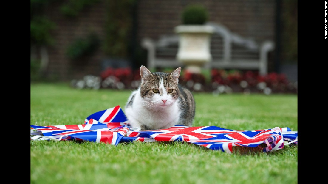 He will join Larry, official mouse catcher at Downing Street, the home of the British Prime Minister.