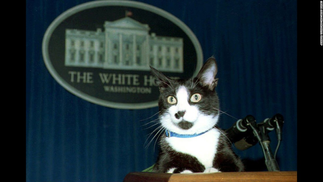In the U.S., Socks, the Clinton family's cat, entertained journalists during this press conference in 1994.