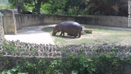 cnnee pkg osmary hernandez zoologico venezuela vulnerable _00000421