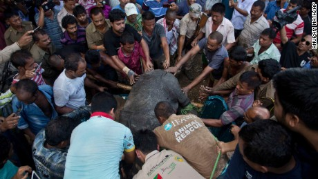 Wildlife conservationists lift a rescued baby rhino into a vehicle.