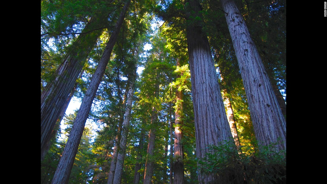 """For his 50th birthday, Mark Woods and his family returned to one of the first national parks he had visited as a child: Redwood National and State Parks in California. """"We didn't know it at the time but it would be the last trip we'd do with my mother,"""" said Woods. See more of his journey to 12 parks in 12 months through his pictures."""