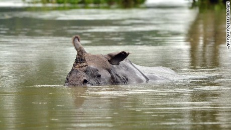 The greater one-horned rhino is a vulnerable species, according to WWF.