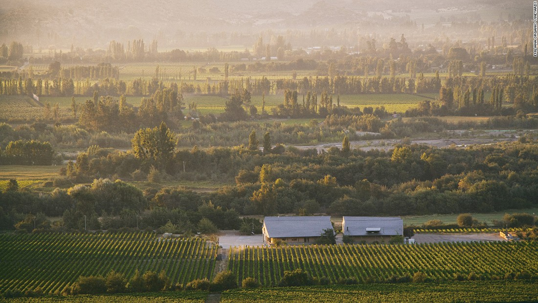 <strong>Emiliana Organic Vineyards, Valparaiso, Chile: </strong>Emiliana Organic Vineyards produces award-winning wine in an idyllic setting. Flowers and food crops grow as well as grapes, and alpacas, horses and geese roam in the fields.