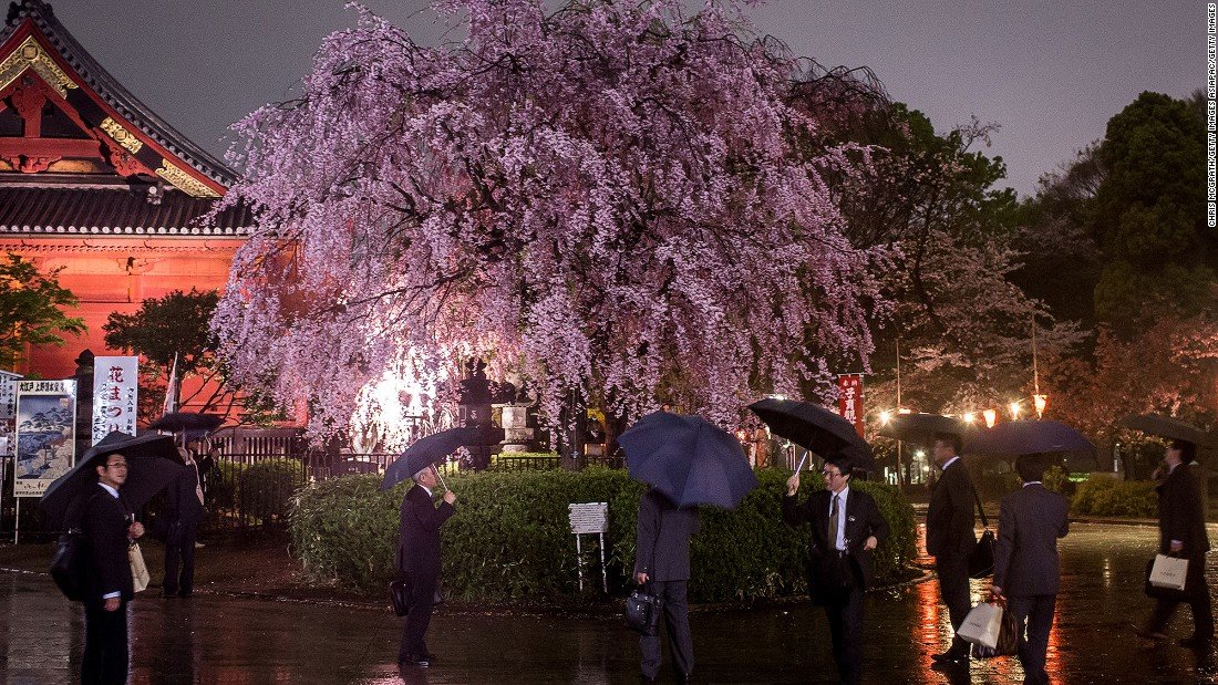 Every spring, Japanese people will gather under sakura trees for hanami -- a traditional spring party in Japan to enjoy picnics and cherry blossom viewing. Ueno Park is a popular hanami spot for Tokyoites.