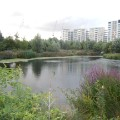 wetland olympics