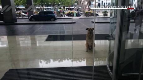 cnnee digital pkg rubio perro alemania azafata_00000000