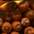 miracle mile indigo carrots