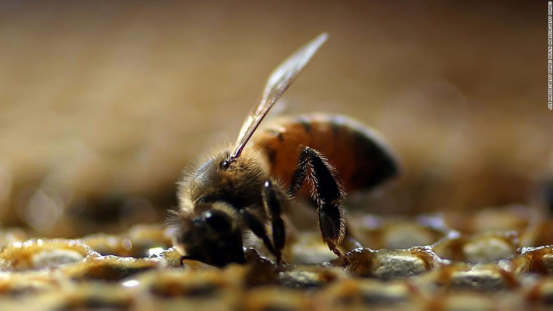 Allergists warn of bee and wasp venom shortage