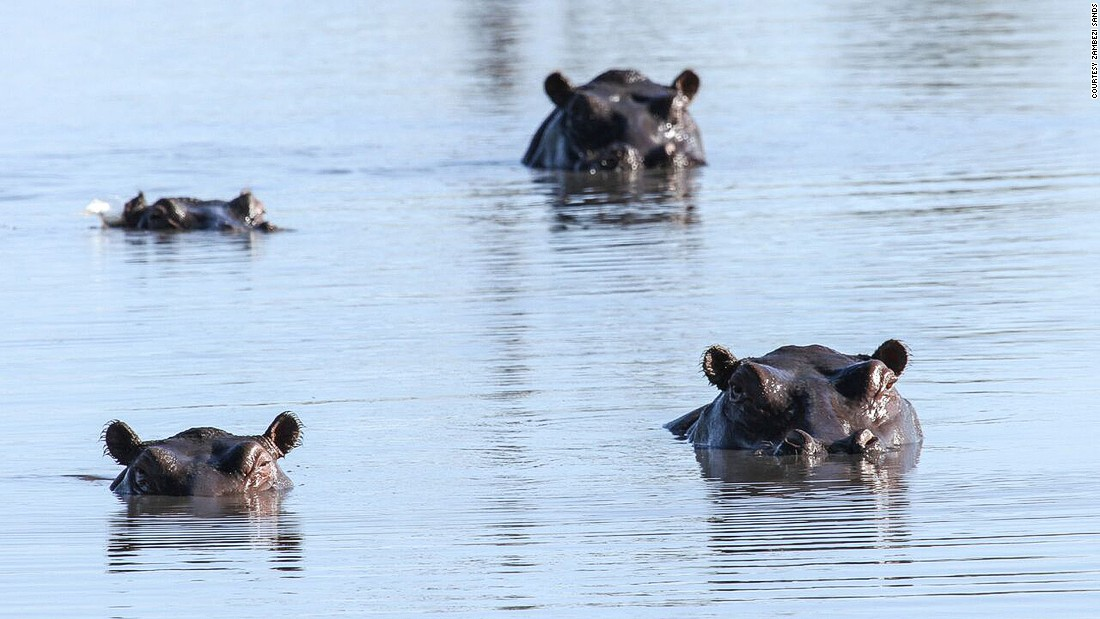 The Zambezi, crawling along the border of Zimbabwe, is the fourth longest river in Africa. It's home to hungry crocodiles and big herds of hippos -- one of Africa's deadliest animals.