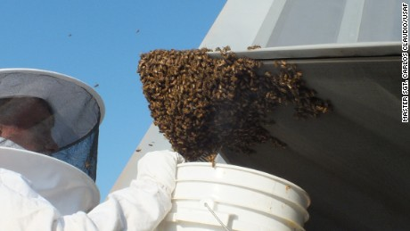 Beekeeper Andy Westrichwas called to remove and relocate the bees to a safe place.