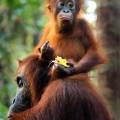 1. Indonesia Borneo