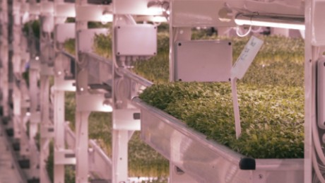 Built to shelter 8,000 people, the tunnel now houses shelves of growing herbs.