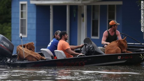 Rescuers move cattle across a flooded street to dry land in Sorrento, Louisiana.