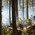 Rotorua2 Mountain Biking in the Redwoods - Credit Graeme Murray