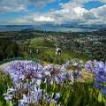 Rotorua1 Rotorua from Skyline