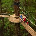 Rotorua4 Redwoods Treewalk