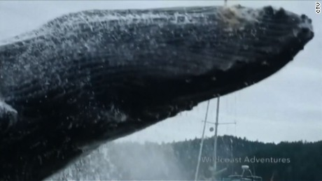 Giant whale stuns kayakers