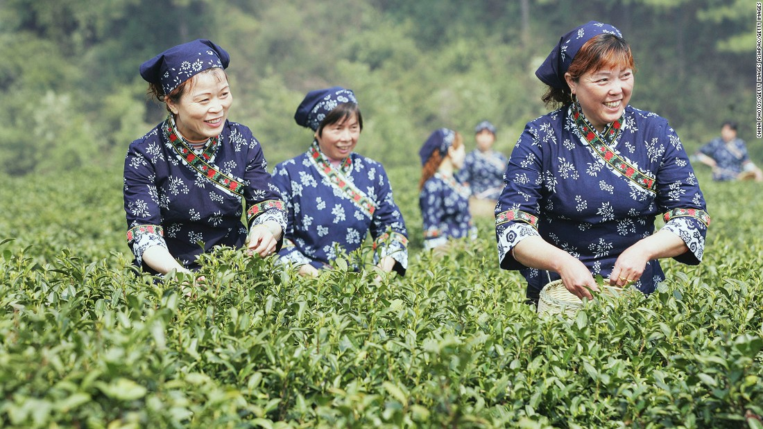 Hangzhou is home to some of China's finest -- and priciest -- tea leaves. The village of Longjing is where tea leaves were grown for China's ancient emperor. Tea-picking season is usually around late March to April, when travelers from across the country visit the village for quality tea leaves.