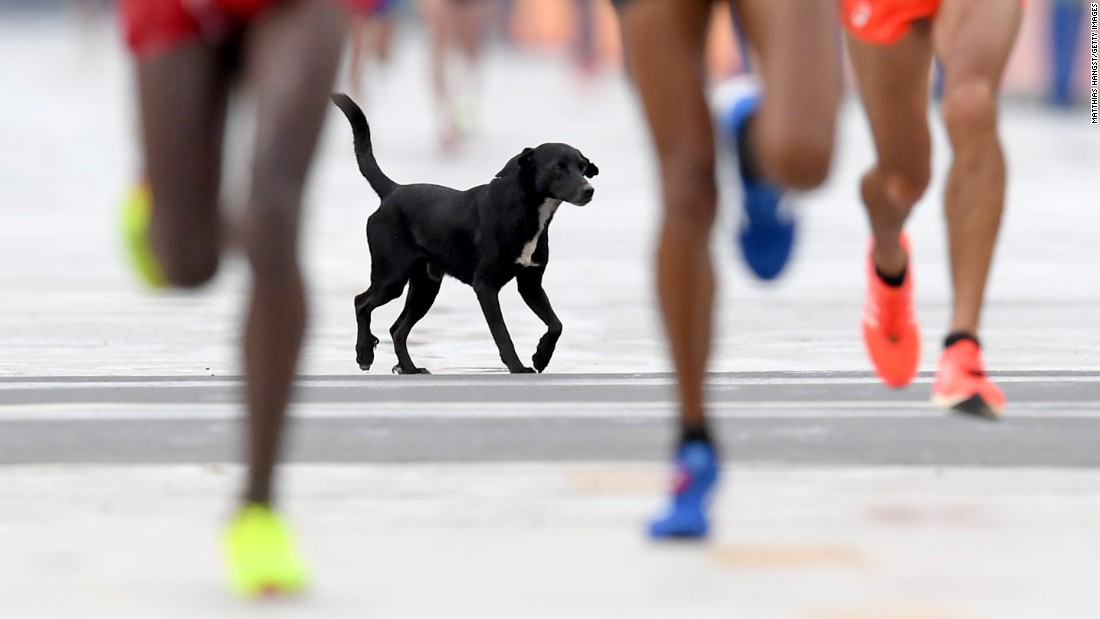 A dog joins the race as runners approach the finish line of the men's marathon.